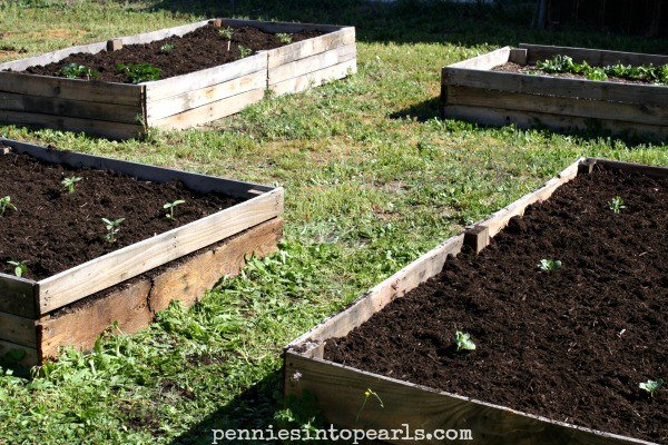 Wood garden beds DIY