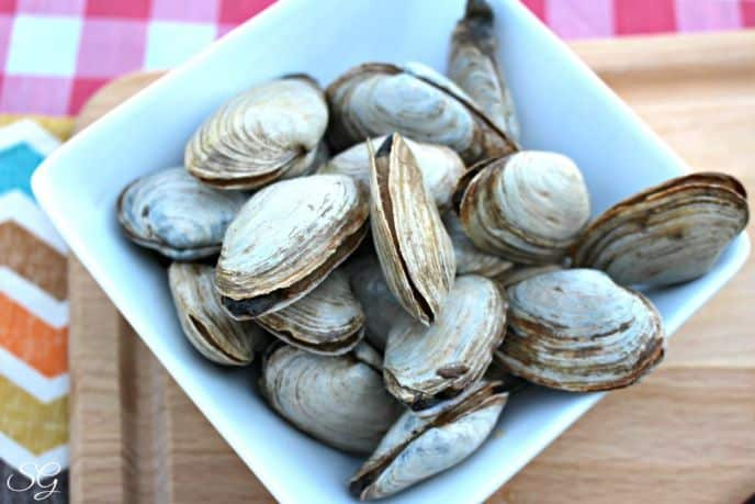 New England Steamers, Steamed Clams