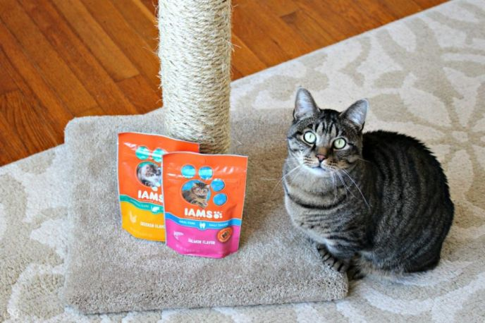 How to Re-Sisal a Cat Scratching Post