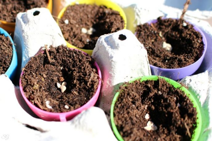 Sowing Seeds in Easter Eggs