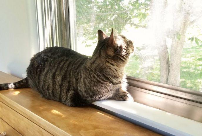 Cat relaxing on headboard