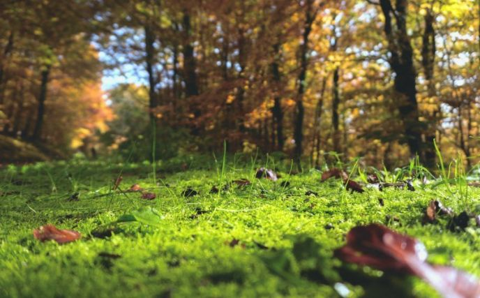 How To Get Rid Of Moss In The Lawn Naturally