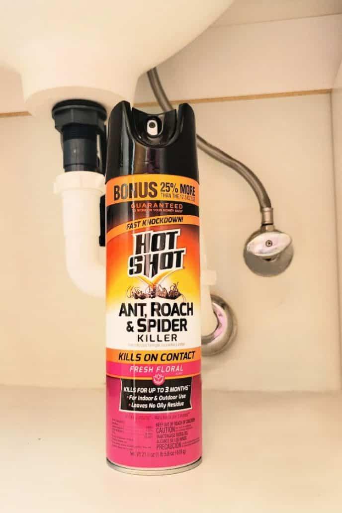 Get rid of ants in the bathroom, under sink